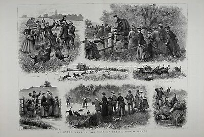 WALES Clwyd, HUNTING Otter with Otterhound Dogs, Huge 1880s Antique Print
