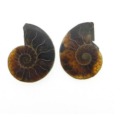 11.2 Cts AAA Quality 1 Pair Fossil Ammonite 15x20mm Loose Gemstone ER10102