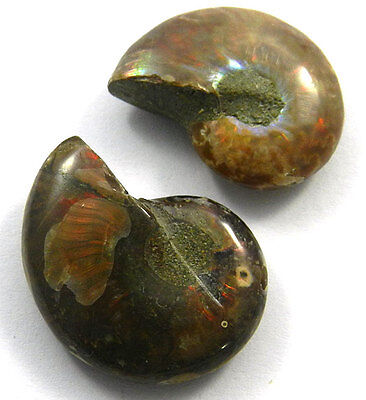 Shining Gems!10.37GM 1 Pair NATURAL AMMONITE FOSSIL 18x24MM natural cab gemstone