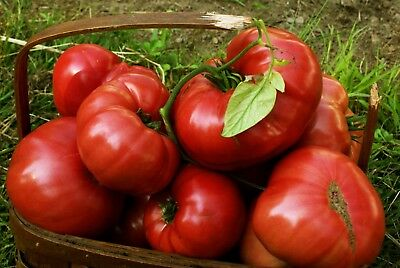 Pink Brandywine Heirloom Tomato Seeds- 75+ 2018 seeds        $1.69 Max Shipping