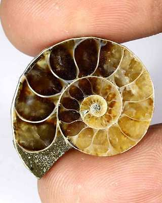 27.00Cts 21x25mm 100% NATURAL IRIDESCENT AMMONITE CABOCHON LOOSE FOSSIL GEMSTONE