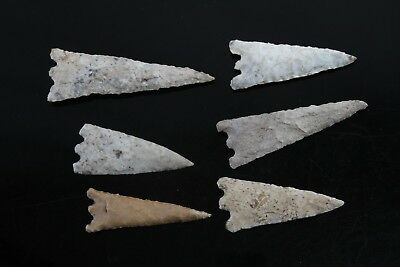Florida Hernando Arrowhead Point Lot Of 8 Complete 2.5 In To 3 1/8 In