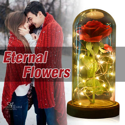 WR Beauty and the Beast Enchanted Red Rose In Glass Dome LED Lamp Christmas Gift