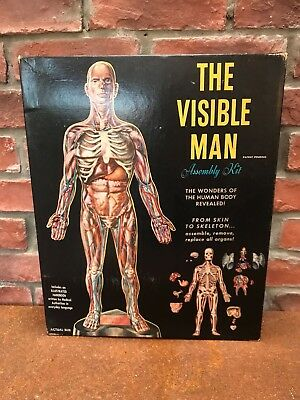 Vintage 'Visible Man' Anatomical Model Assembly Kit