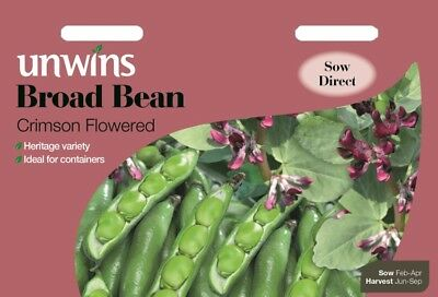 Broad Bean Crimson Flowered