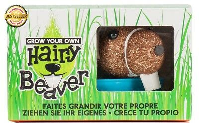 Hairy Beaver- Grow Your Own
