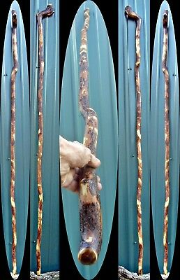 "6' 3"" Large Shillelagh Root Wood Wizard Staff Stout Ultra Light WOW Sorcerer Orc"