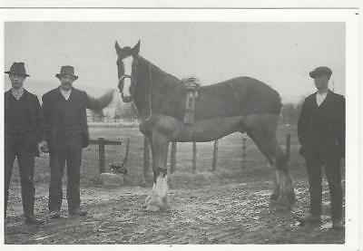 Horse Postcard-Nostalgic Ink - Men with Clipped and Docked Working horse