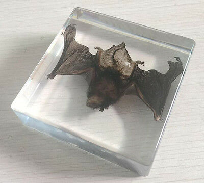 Gothic Real Wild Bat in Clear Lucite amber Resin Paperweight Specimen Decoration