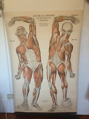 Set of Six Vintage A.J. Nystrom Frohse Anatomical Medical Charts in Oak Rack