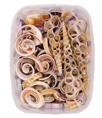 Seashells - Cut Shell Pack 170 Grams - Shells for Crafts Supplies and Decorat...
