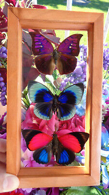 "3 Real Framed Butterflies Size 4.5""x8.5""inches Double Glass"" Special Butterfly"""