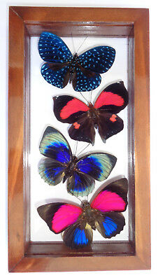 "4 Real Framed Butterflies **special Butterfly**mounted Double Glass 4.5""x8.5"""