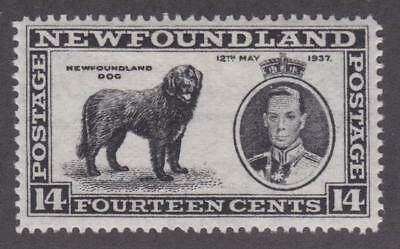 Newfoundland 1937 #238 Long Coronation Issue (Newfoundland Dog) VF MH