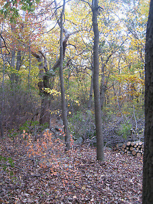 Virginia property, .46 acre lot in Shawnee subdivision Fredrick County land