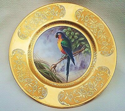 """Pickard 1900's Hand Painted """"Macaw Tropical Parrot"""" 10"""" Gold Scenic Plate"""