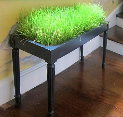 Organic 100 Cat Grass Seeds Great for Digestive System Easy Growing L001