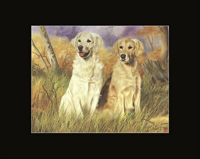 New Golden Retriever Pair Matted Picture Print