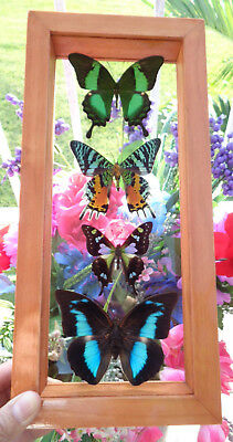 """4 Real Framed Butterflies 6""""x13""""inches Mounted Wood Frame Double Glass Amazing"""