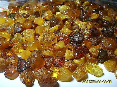 Lot of  Natural Genuine Baltic Amber stones 500 gr.