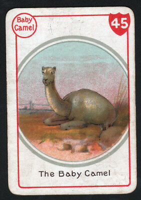 CAMEL BABY, Lovely Victorian Playing Card- Swap Card!