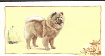 DOG Chow Chow, Named Champ, Color Trading Card, 1934