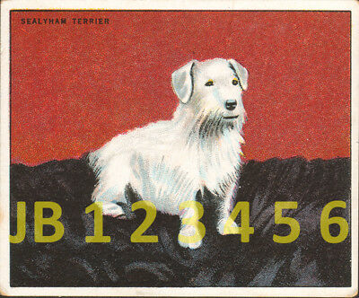 DOG Sealyham Terrier, Antique British 1924 Trading Card