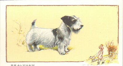 DOG Sealyham Terrier, Named, Color Trading Card, 1934