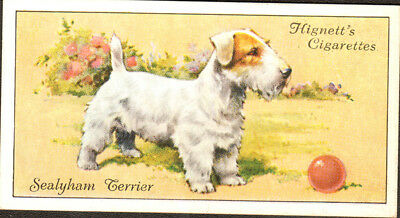 DOG Sealyham Terrier, Small British Trading Card 1936