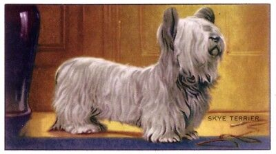DOG Skye Terrier, 70-year-old Trading Card, 1930s