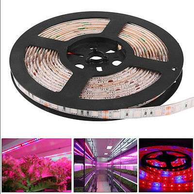 5M SMD 5050 LED Grow Light Strip Lamp Red Blue For Indoor Plants FloECd