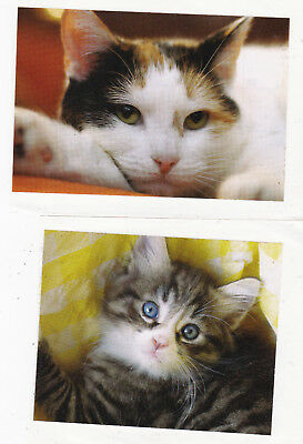 Lot of 2 Kids Stickers Cats / Kittens Cute Animals Decals Scrapbooking Crafts