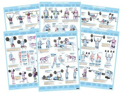 Body Building Poster Weight Training Exercise Chart Gym Fitness Sports Workout