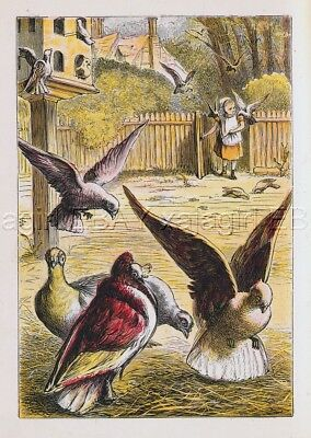 BIRD Pigeon Fancy Pigeons Fed by Girl, Antique 1870s Chromolith Print