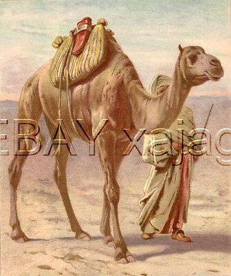 CAMEL in Desert, Exquisite Large Antique Chromolith 1890s Print