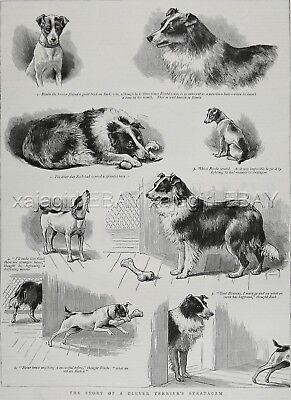 Dog Fox Terrier Tricks Border Collie Out of Bone, Large 1880s Antique Print