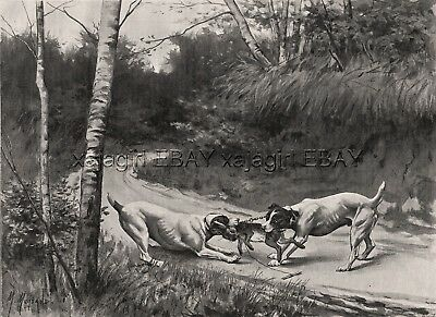 Dog Fox Terriers (Breed ID'd) Fight Over Rabbit, 1890s Antique Print & Article