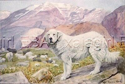 DOG Great Pyrenees Mountain, 85+ Year Old ANTIQUE Print