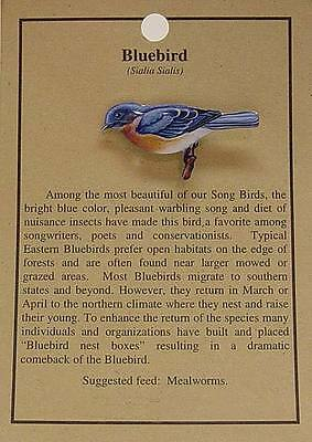 Hat Pin Lapel Pins Bluebird Bird  Free Shipping
