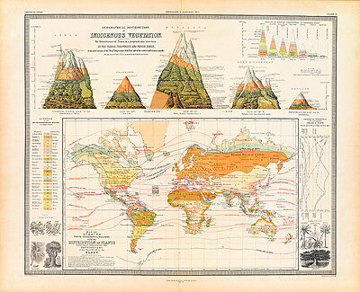 Geographical Distribution of Indigenous Vegetation 1854 Map A1 Art Print