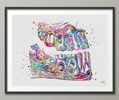 Teeth Anatomy Watercolor Print Tooth Anatomical Art Dental Clinic Decor Art