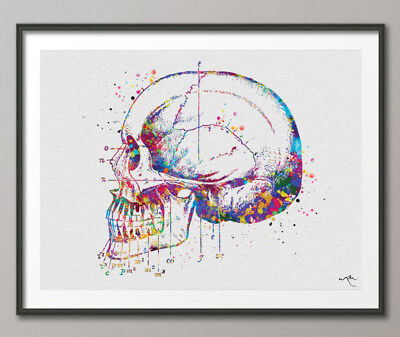 Skull and Tooth Watercolor Print Tooth Anatomy Art Vintage Art Dental Clinic Art