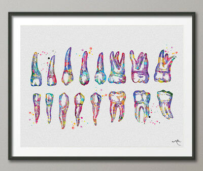 Teeth Diagram Watercolor Print Tooth Anatomical Art Dentistry Art Dental Clinic
