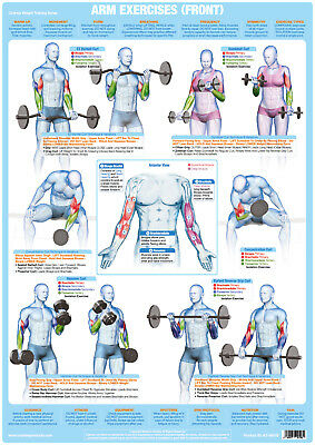 Bodybuilding Poster Weight Training Arms Biceps Exercise Gym Fitness Chart