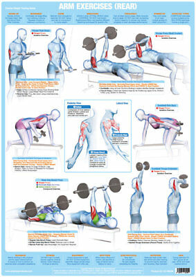 Arm Muscles (Back) Weight Lifting and Bodybuilding Poster Gym Exercise Chart