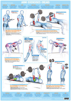 Arm Muscles (Rear) Weight Lifting Chart Bodybuilding Gym Exercise Poster