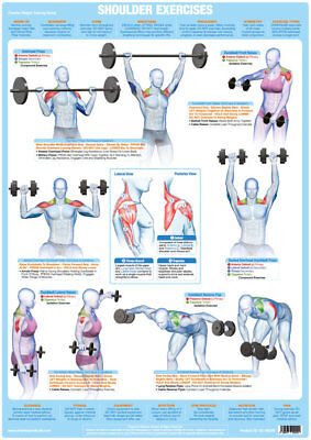 Shoulder Muscles Weight Training Chart Body Building Gym Exercise Poster