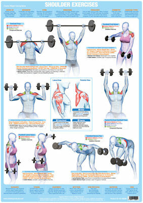 Shoulder Muscles Weight Training and Body Building Poster Gym Exercise Chart