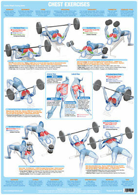 Chest Muscles Weight Lifting and Body Building Poster Exercise Training Chart