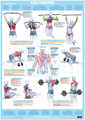 Back Muscles Weight Training and Body Building Poster Gym Exercise Chart